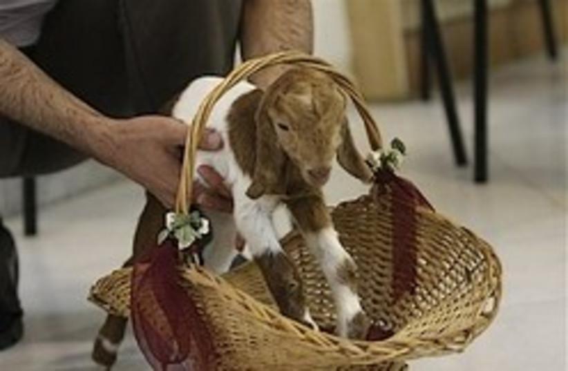 iran cloned goat 248.88 ap (photo credit: AP)