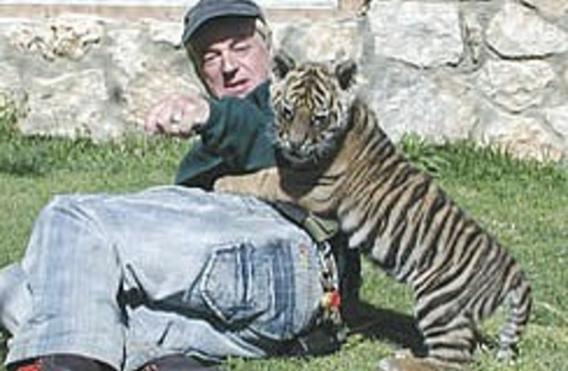 tiger 248.88 (photo credit: Atuart Winer)