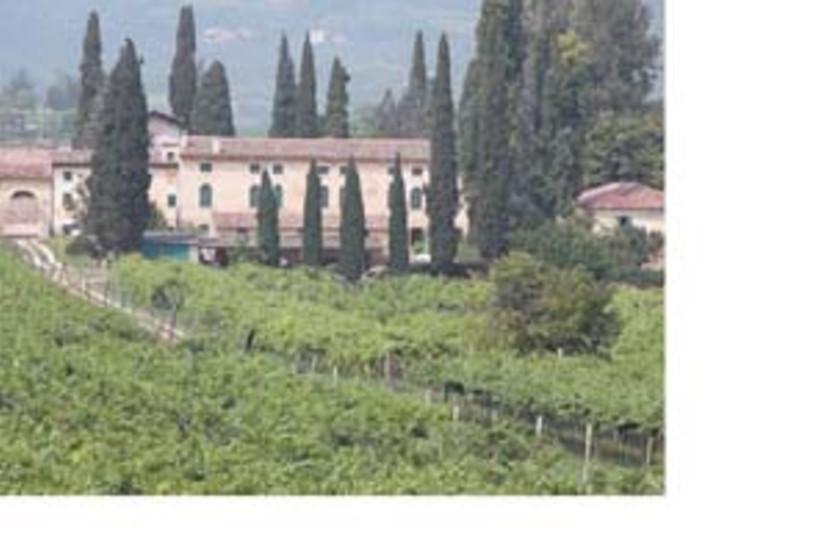 sartori winery (photo credit: )