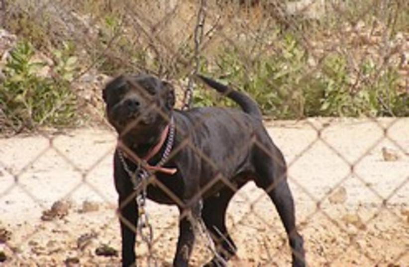 assault dog settlement 248.88 (photo credit: Dan Izenberg)