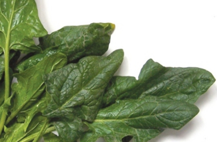 Among the world's healthiest vegetables, spinach (credit: Boaz Lavi)