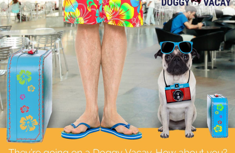 Vibe Israel promotional poster for dog vacation contest (photo credit: Courtesy)