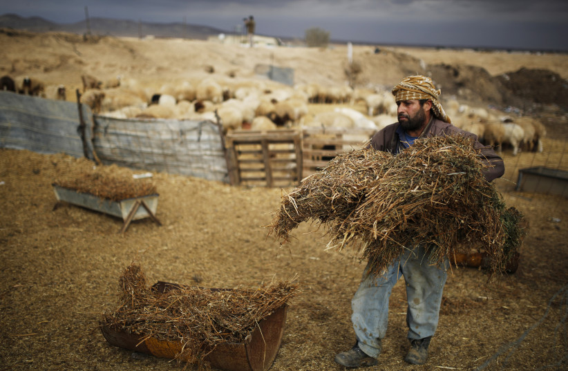A man carries hay to feed livestock in the Beduin village of Bir Mshash in Israel's southern Negev December 10, 2013. (photo credit: REUTERS)