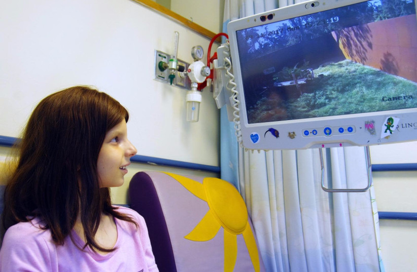 A child looking at the monkeys at the Ramat Gan safari from her hospital bed (photo credit: RAMAT GAN SAFARI)