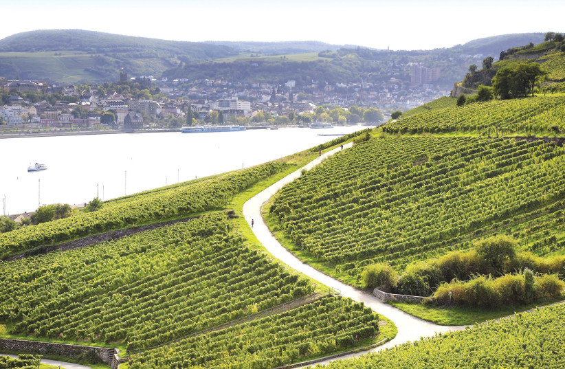 THE RHINE VALLEY vineyards of Blue Nun in Germany. (photo credit: Courtesy)