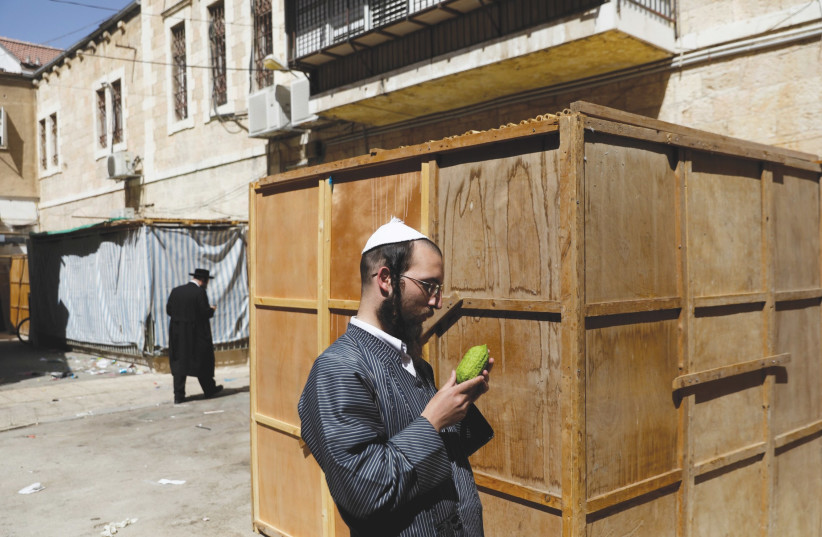 An ultra-Orthodox Jew inspects an etrog (photo credit: REUTERS)