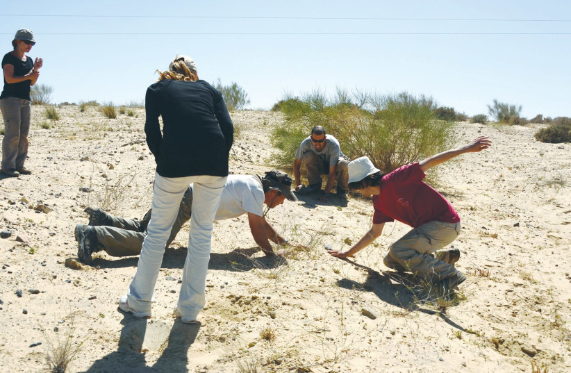 A GROUP of amphibian and reptile researchers capture lizards in the Negev. (photo credit: DANIEL BERKOWITZ)