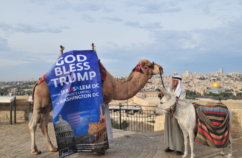 A camel outside the Old City sports a 'God Bless Trump' banner in celebration of the US President's declaration recognizing the city as Israel's capital. (photo credit: RAFI KOTZ)