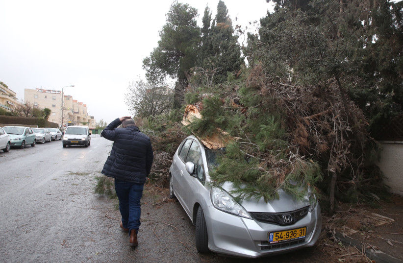 A broken tree rests on top of a car in the Arnona neighborhood of Jerusalem, January 5, 2018 (photo credit: MARC ISRAEL SELLEM)