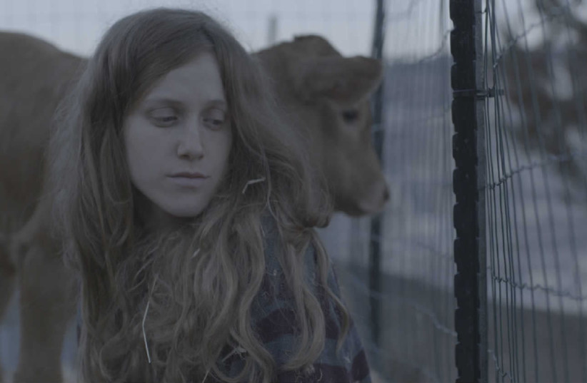 "A scene from ""Red Cow"" (photo credit: COURTESY OF ISRAEL FILM FUND)"