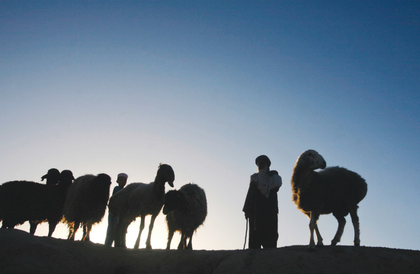 A PASHTUN man with his livestock. (photo credit: REUTERS)
