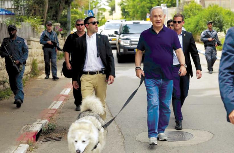 Prime Minister Benjamin Netanyahu walks the family dog in the capital's Rehavia neighborhood in this file photo (photo credit: Courtesy)