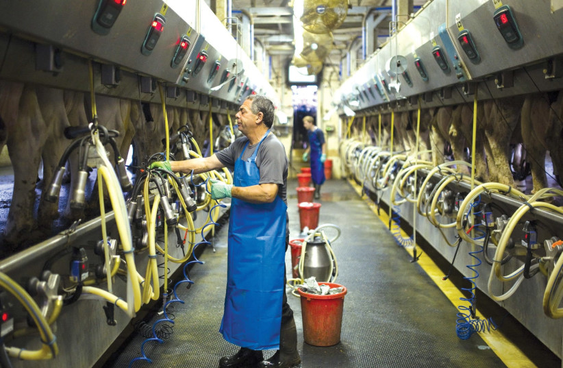 A dairy farm in Israel uses innovative milking technologies to boost productivity. One example of how Israel is helping the world. (photo credit: REUTERS)