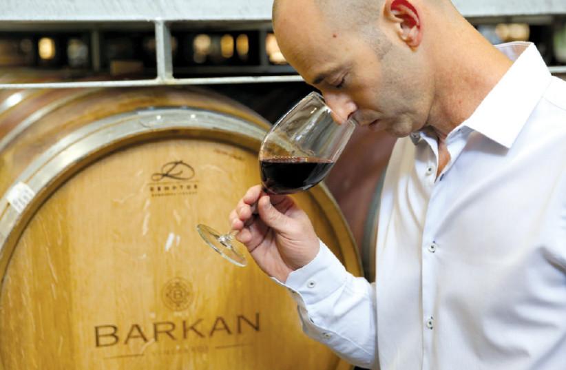IDO LEWINSOHN, the new winemaker of Barkan Winery (photo credit: Courtesy)