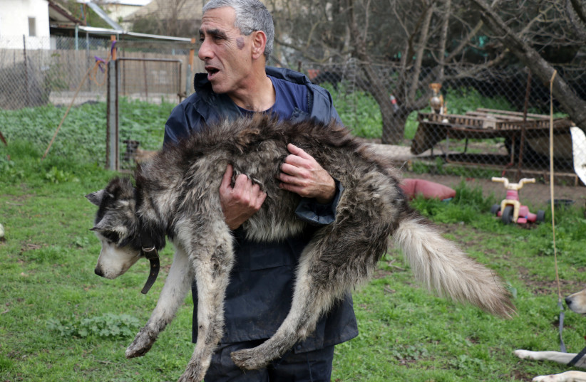 Kobi Brook holds one of the elderly canine residents of Hofshi (photo credit: NOA MEIRSON)