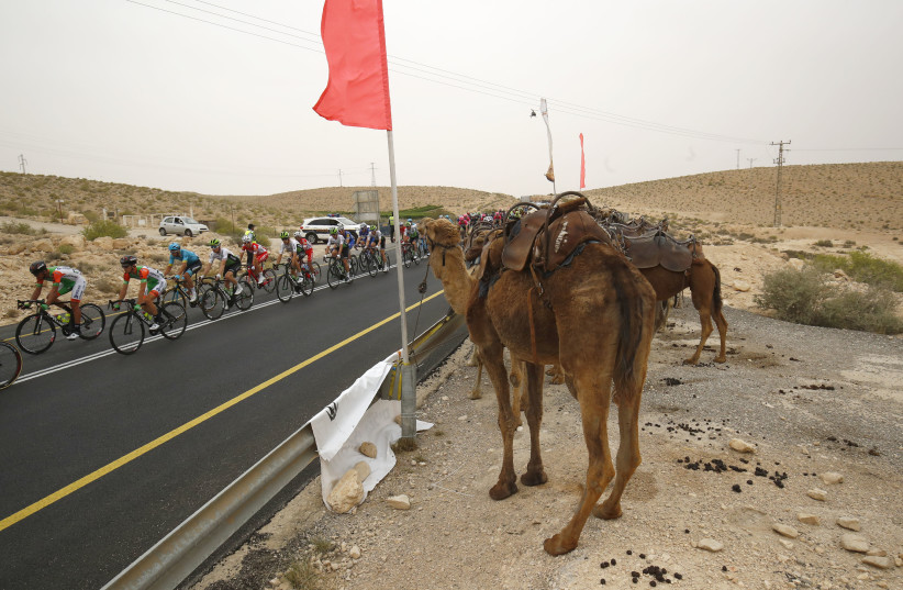 The pack rides past camels during the 3rd stage of the 101st Giro d'Italia, Tour of Italy, on May 6, 2018, 229 kilometers between Beer-Sheva and Eilat.  (photo credit: LUK BENIES / AFP)