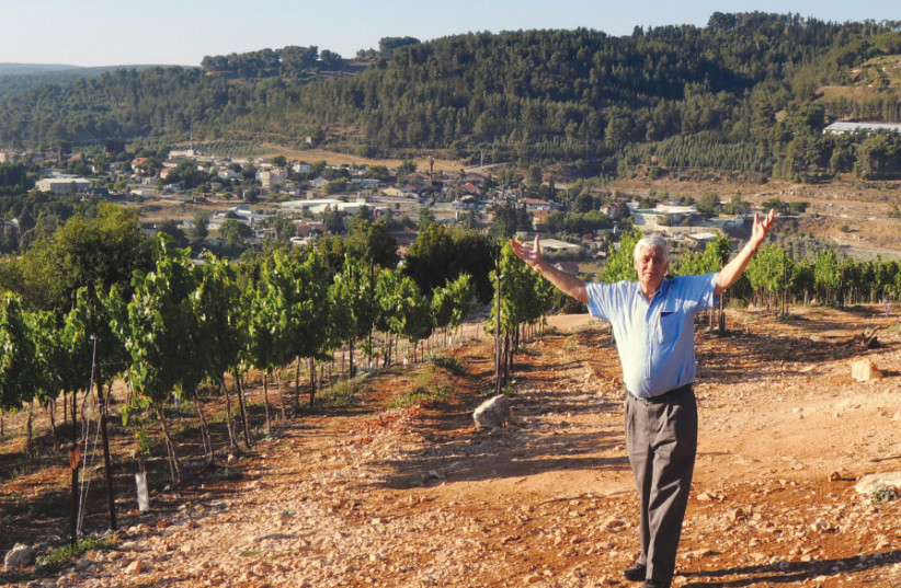 JACQUES CAPSOUTO in his Western Galilee vineyard (photo credit: Courtesy)