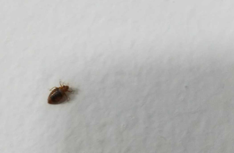 Idf Soldiers Angered By Inaction Over Bed Bug Infestation On Base The Jerusalem Post