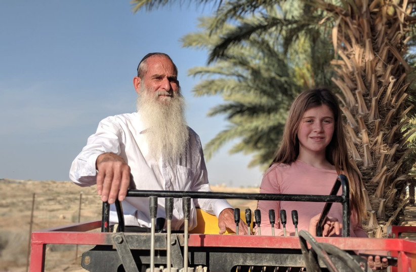 Yehoshua Meshulami and one of his children working on the dates orchard (photo credit: Courtesy)
