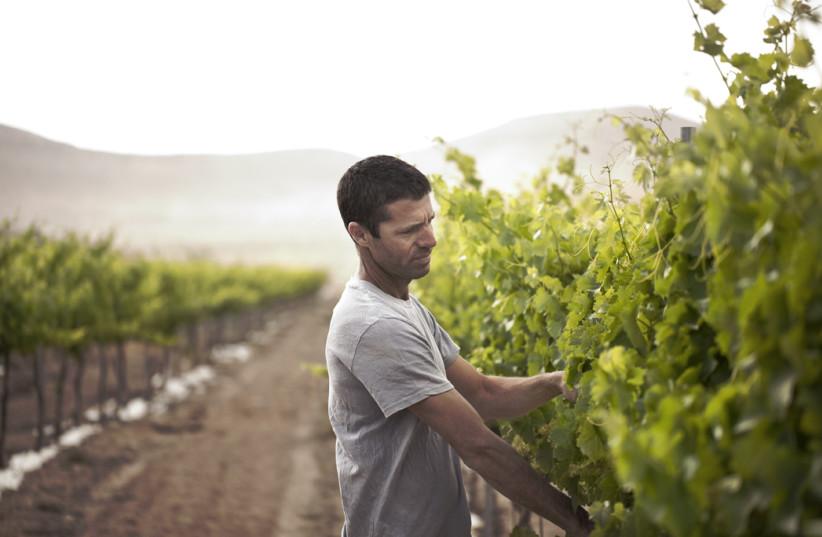Eran Raz is the passionate wine grower of Nana Vineyard (photo credit: Courtesy)