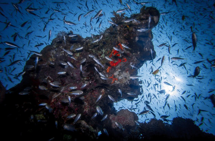 The Reef in Eilat, part of a report by the Israel Nature and Parks Authority August, 8 2018. (photo credit: OMRI YOSEF /ISRAEL NATURE AND PARKS AUTHORITY)