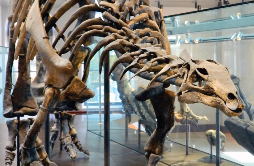 THE AGE of dinosaur bones: Not a scientific delusion. (photo credit: PIXABAY)