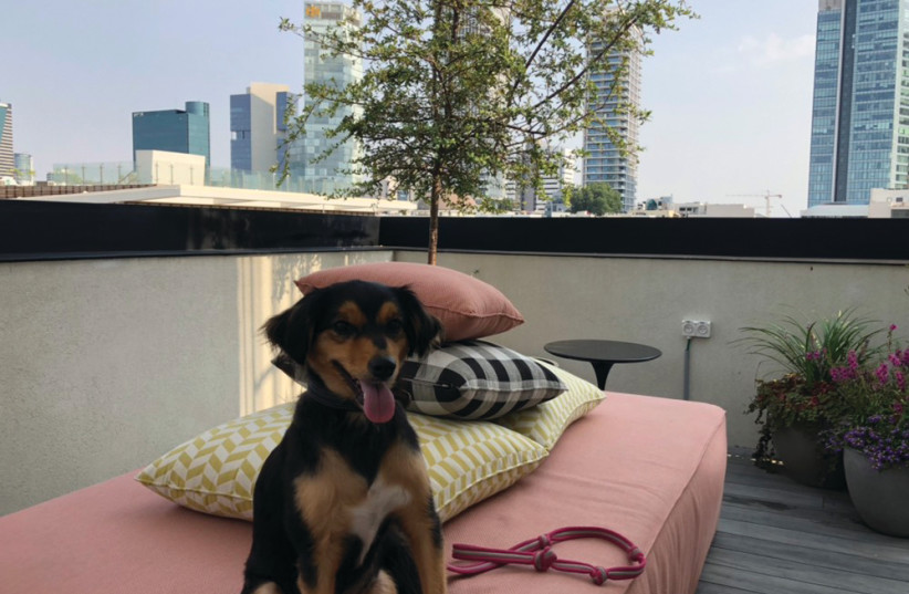 Fabric is pet-friendly and has a wonderful rooftop terrace with sweeping views of Tel Aviv (photo credit: ANNA AHRONHEIM)