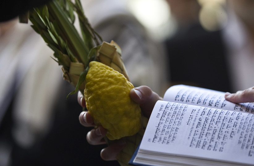 A Jewish worshipper holds the Four Species, used in rituals for the holiday of Sukkot which began last week, before the recitation of the priestly blessing at the Western Wall in Jerusalem's Old City September 30, 2015 (photo credit: REUTERS/Ronen Zvulun)