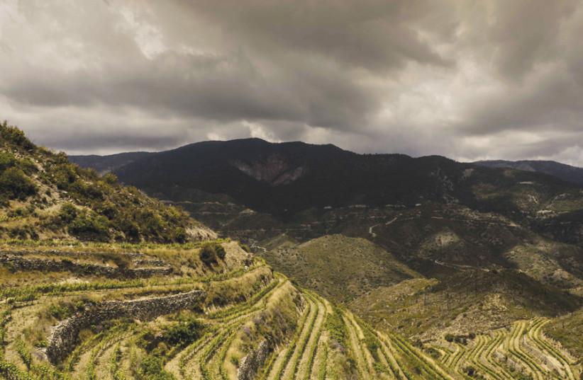 BEAUTIFUL TSIAKKAS Winery vineyards. (photo credit: Courtesy)