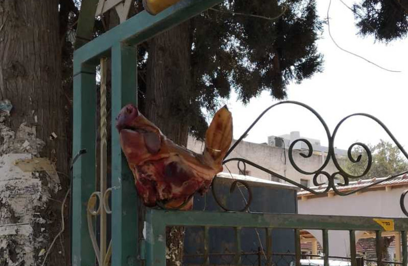 Pig's head in a synagogue in Ramat HaSharon  (photo credit: POLICE SPOKESPERSON'S UNIT)