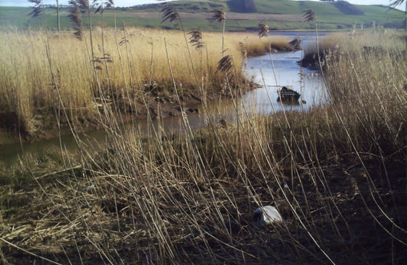 REEDS GROW in a Scottish salt marsh: 'If a person takes a bundle of reeds – can he break them at the same time? But if he takes one at a time, even a child can break them'  (photo credit: Wikimedia Commons)