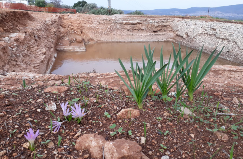 The newly discovered Roman-era pool in Tzipori (photo credit: ISRAEL NATURE AND PARKS AUTHORITY)