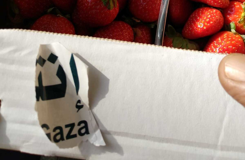 Imported strawberries from the Gaza Strip to be sold in Israel (photo credit: AGRICULTURE MINISTRY)