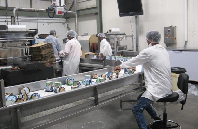 PHISH FOOD: Packaging ice cream in the Be'er Tuviya factory. (photo credit: CARL HOFFMAN)