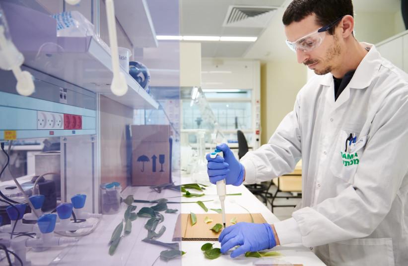 A researcher works at ADAMA's new global R&D center in Ne'ot Hovav (photo credit: NATALIE COHEN-KADOSH)