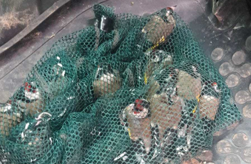 Twelve goldfinches trapped in a net, the bird is protected under Israeli law. (photo credit: POLICE SPOKESPERSON'S UNIT)