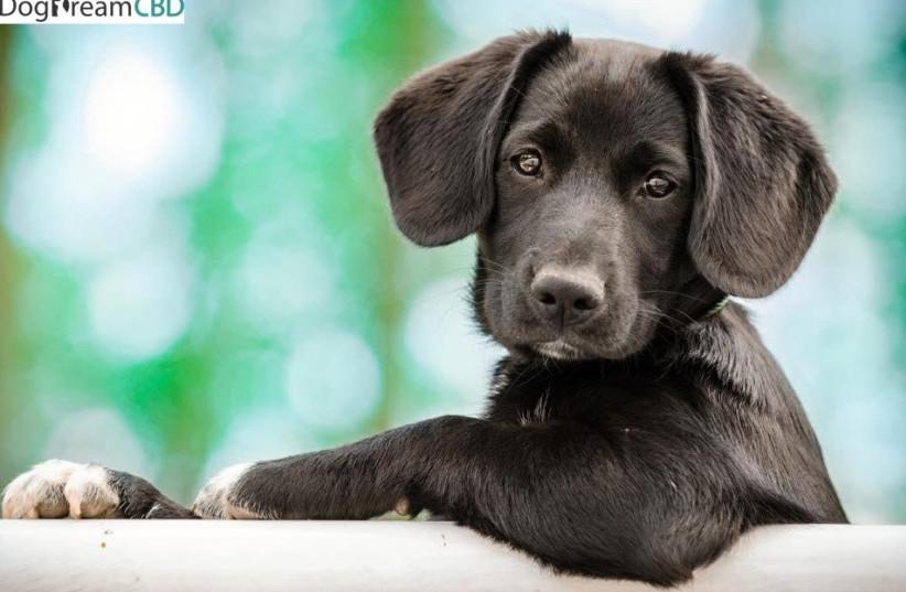 Dog [Illustrative] (photo credit: Courtesy)