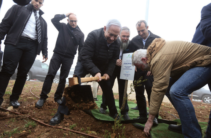 Prime Minister Benjamin Netanyahu plants a tree on the outskirts of Elazar in Gush Etzion on January 26, vowing not to uproot settlements in any peace deal (photo credit: MARC ISRAEL SELLEM)
