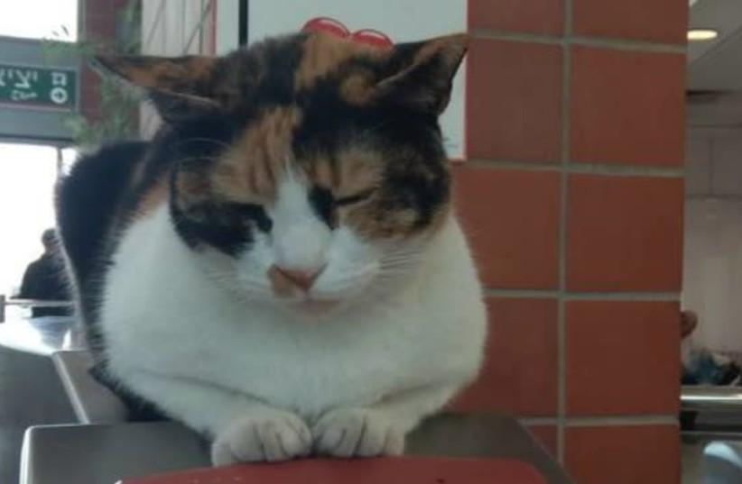 Calico cat Mitzi (photo credit: ISRAEL RAILWAYS)