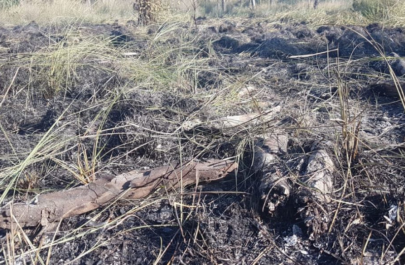 Aftermath of fire in Beeri forest  (photo credit: OSHRI TZIMER)