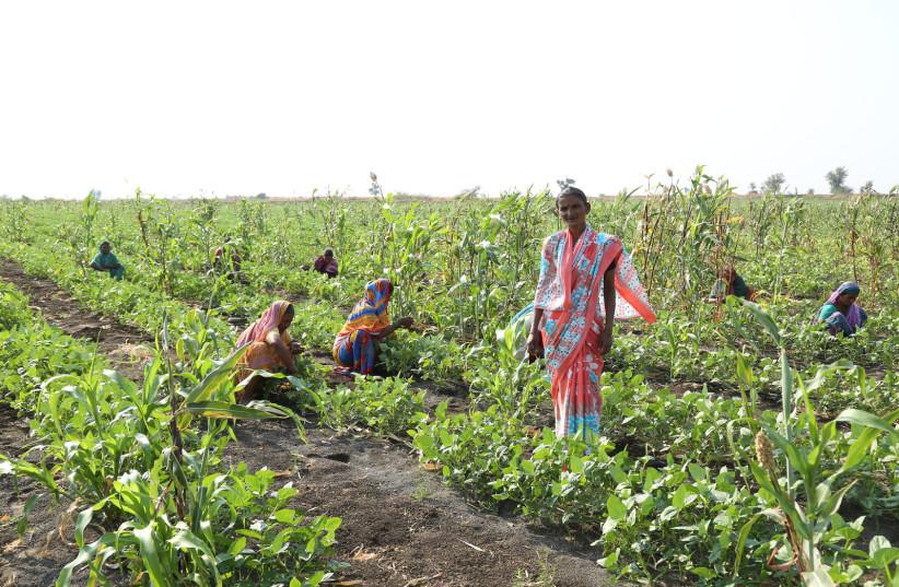Farmers at work in Rhamtal, India, after the completion of Netafim's community irrigation project (photo credit: NETAFIM)