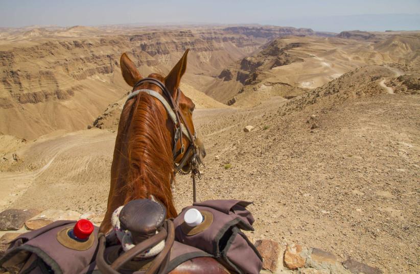 View over the Tzeelim Kenyon, Judean Desert / Courtesy (photo credit: Courtesy)