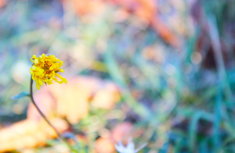 A yellow flower in a field (illustrative) (photo credit: Wikimedia Commons)
