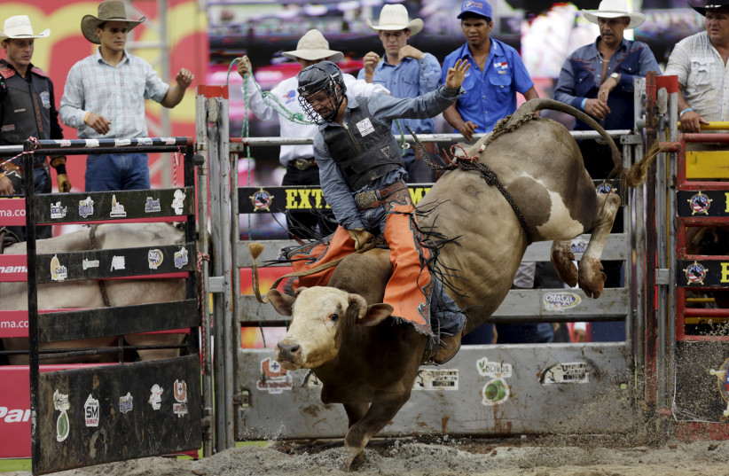 Jared Long of the U.S. rides a bull during the first international cowboy edition of the Extreme American Rodeo in Panama City September 27, 2015 (photo credit: CARLOS JASSO/REUTERS)