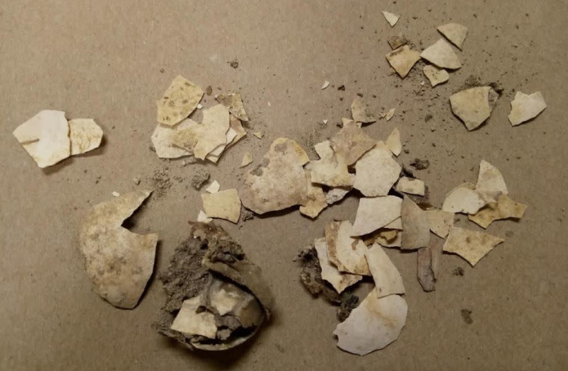 Egg shells from the City of David [First Temple period].  (photo credit: BAR ILAN UNIVERSITY)