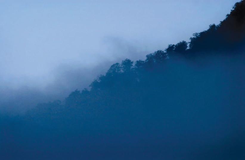 Iranian rain forests near the Caspian sea  (photo credit: REUTERS)