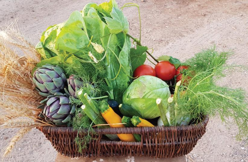 Hama'apil Organic Farm (photo credit: Courtesy)