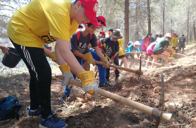 JFS students visit KKL-JNF forests (photo credit: JNF UK)