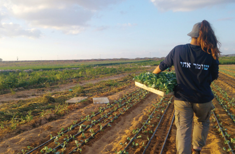 WORKING THE land with HaShomer HaChadash. (photo credit: Courtesy)