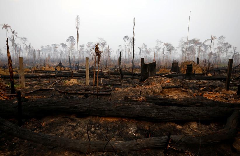 Amazon Rainforest Burns At A Record Rate Raises Int L Concern